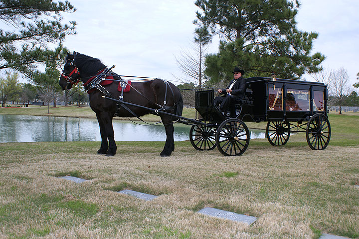Black Horse and Carriage Ride For Funeral Hearse, Houston Carriage