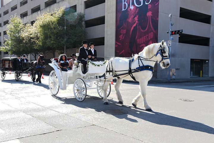 White Horse and Carriage Ride at Parade, Houston Carriage