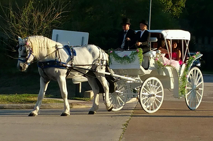 White Horse-Drawn Wedding Carriage with Houston Carriage