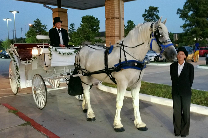 White Vis-a-Vis Wedding Carriage and Horse, Houston Carriage